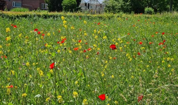 'Wilde bloemen' Hoge Hoffweg