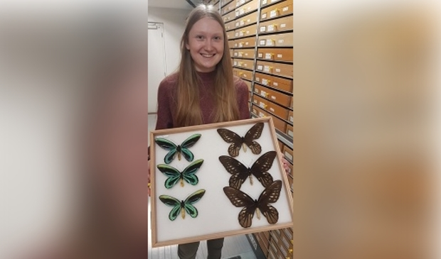 <p>In de collectietoren van Naturalis laat Noortje Looijenga een andere bijzondere vlindersoort, &#39;Birdwing&#39;, zien.</p>