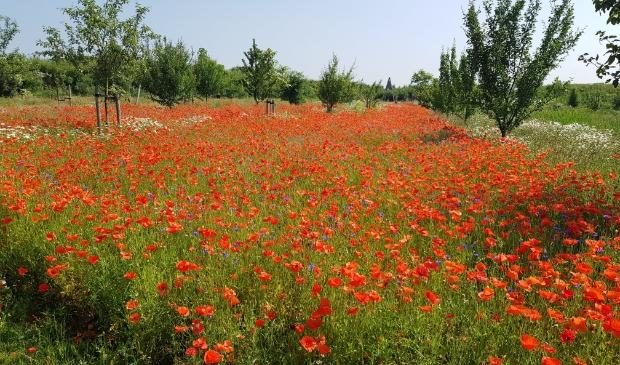 <p>Haarlemmermeer biedt een duizelingwekkende variatie aan bloemen waar de biodiversiteit van af spat.</p>