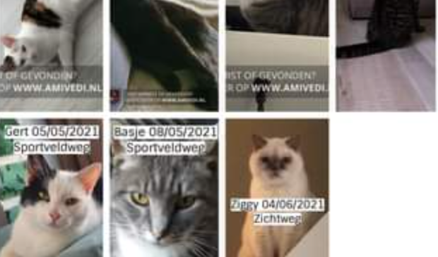 <p>Enkele van de vermiste katten.&nbsp;</p>