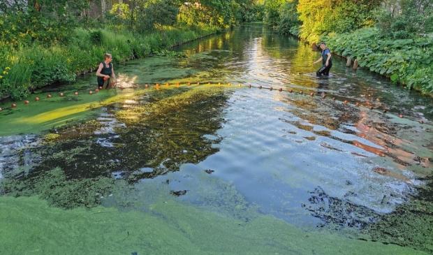 <p>De vissen weden gevangen en verhuisd naar de Amstel.</p>