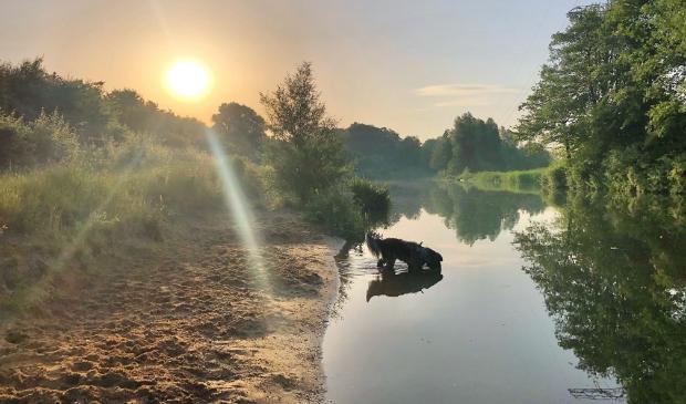 <p>Gisterenochtend heel vroeg een verkoeling in de Krommerijn tijdens de wandeling voor hond Danzo. &nbsp;</p>