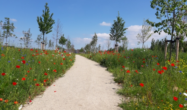 wilde bloemen op de Vijfwal Winny Hessing © BDU media