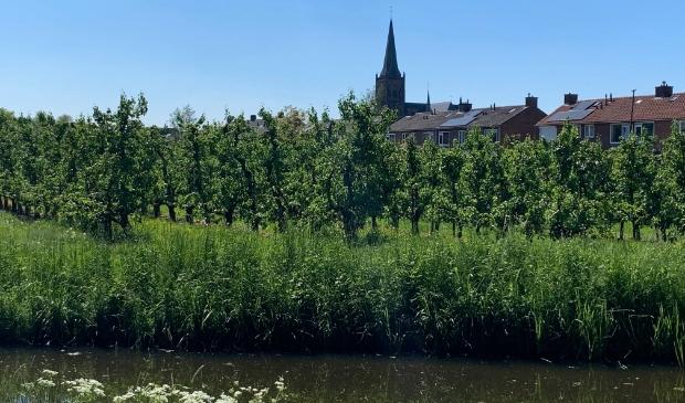 De perenboomgaard in Schalkwijk