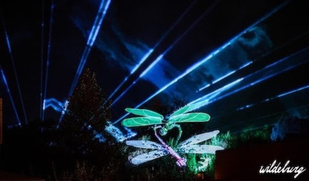 A Visual Conspiracy Odonata © BDU media
