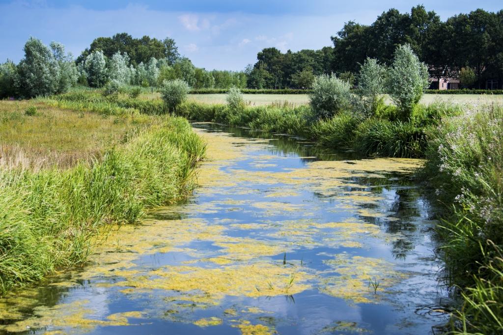 LTO, agrarische bedrijven en waterschappen plaatsen droogtestuwen om het grondwater op peil te houden. ANP © BDU media