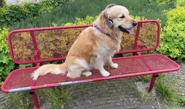 <p>Deze hond neemt een voorproefje op een verhaal. &nbsp;</p>