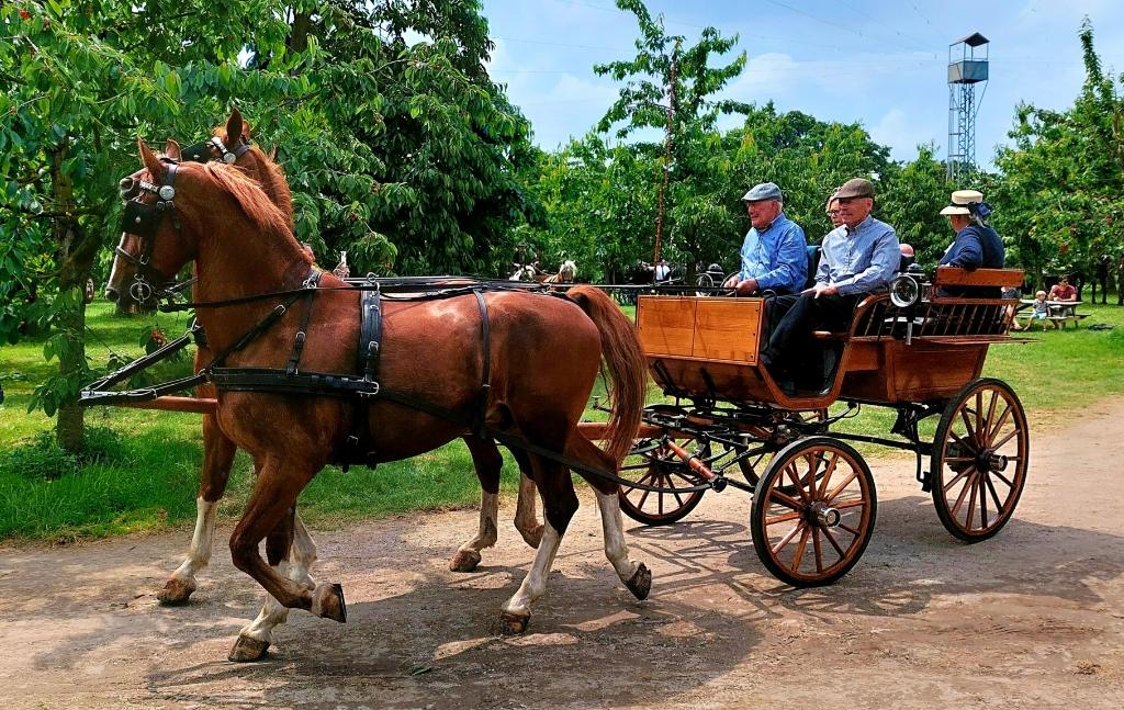 Koets rijden  Alie mensunk © BDU media