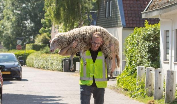 <p>De herder moest zijn schaap honderden meters dragen. Geen pretje met deze temperaturen.</p>