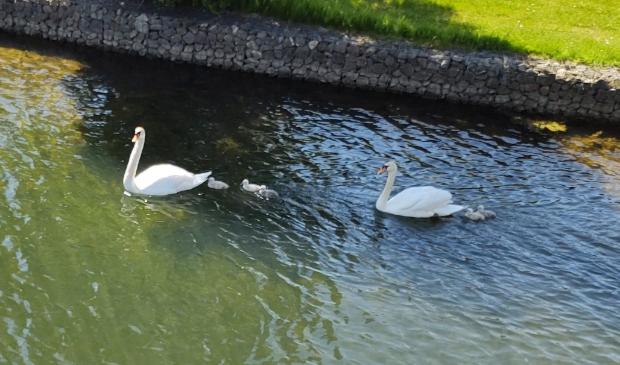 <p>Deze hebben het gelukkig gered en zwemmen in Houten Zuid.</p><p><br></p>