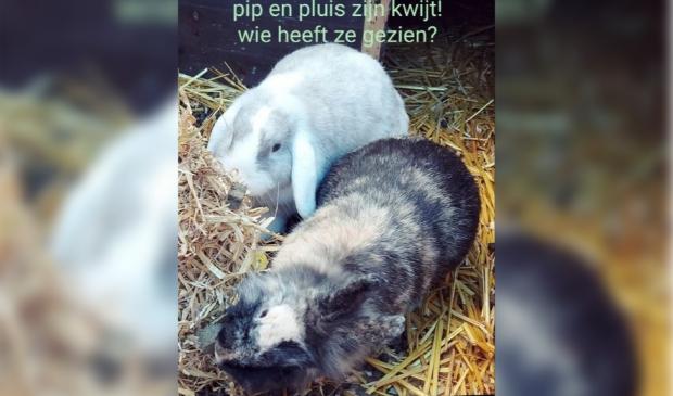 Vermiste konijnen van Lennepstraat Barneveld.