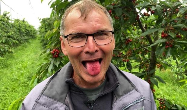 <p>Fruitteler Wim Oskam uit Werkhoven is begonnen met de eerste oogst kersen.</p>