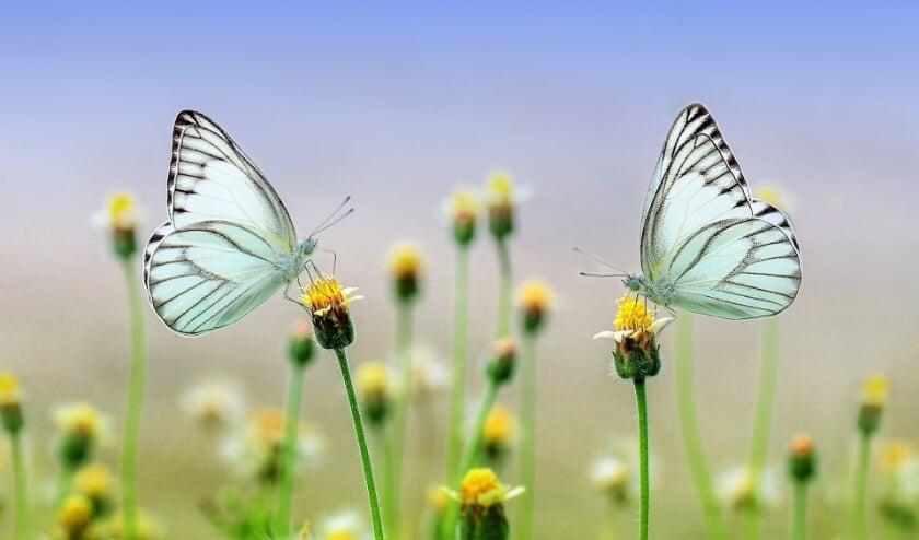 Natuurmonumenten maakt zich zorgen om verdwijnen van leefgebied van insecten