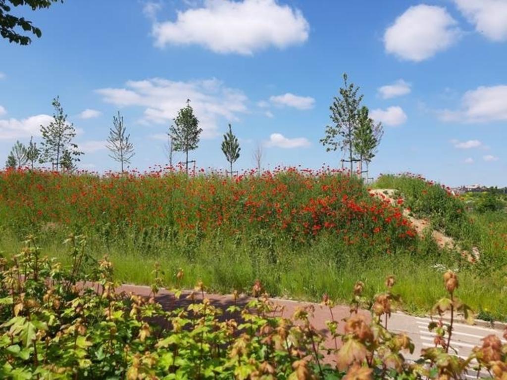 Bloemen op de Vijfwal Winny Hessing © BDU media