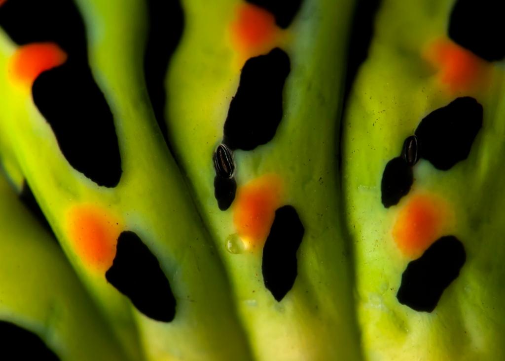 Een rups van dichtbij. Martijn Nugteren © BDU media