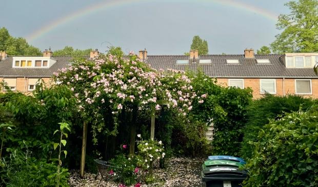 Regenboog boven de rozen in Bankras