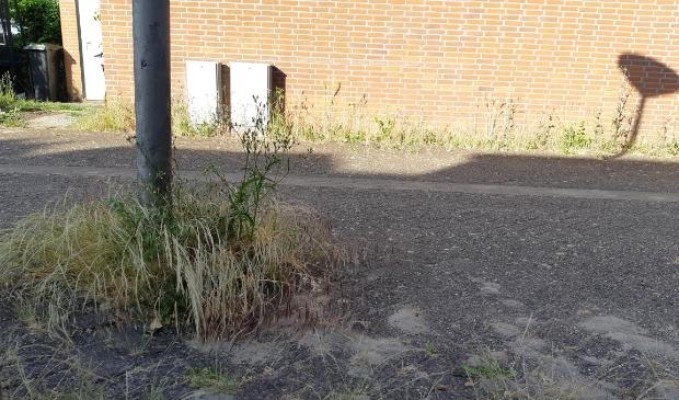 <p>Onkruid in de Molenwijk</p>