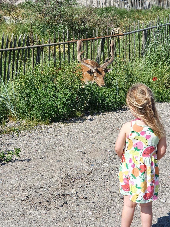 'Deze foto is gemaakt in Zandvoort tijdens een rondje wandelen op vakantie op 16 juni; als je dochter voor het eerst wilde herten ziet, moet je dit even vastleggen.' Larissa © BDU media