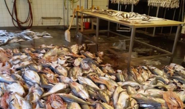 <p>De inspecteurs troffen bij de tweede controle vis, die nog bestemd was voor de verkoop, aan op de grond.</p>