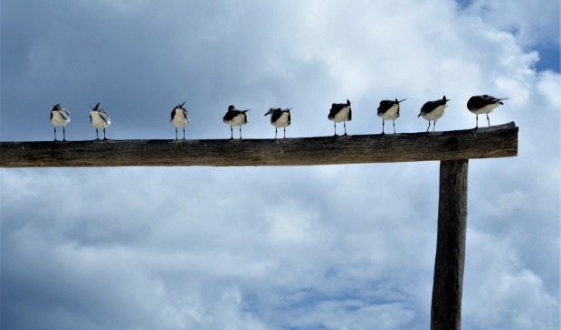 'Plaja del Carmen. Een fotoshoot van vogeltjes, wat een uitzicht!' Peter Pepping © BDU media