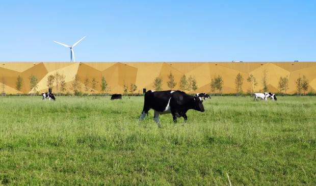 <p>Koeien grazen voor de Koninklijke Munt</p>