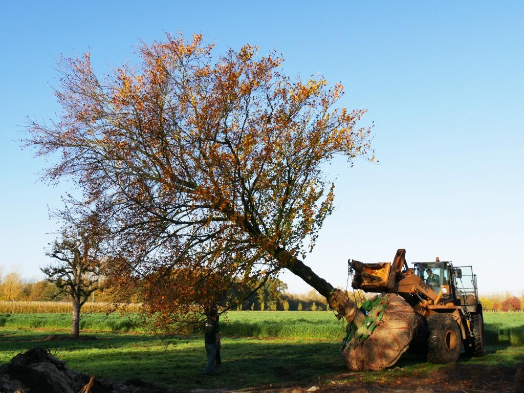 Zo lang een boom transporteerbaar is, kan deze op de kwekerij blijven doorgroeien. Van den Berk © BDU