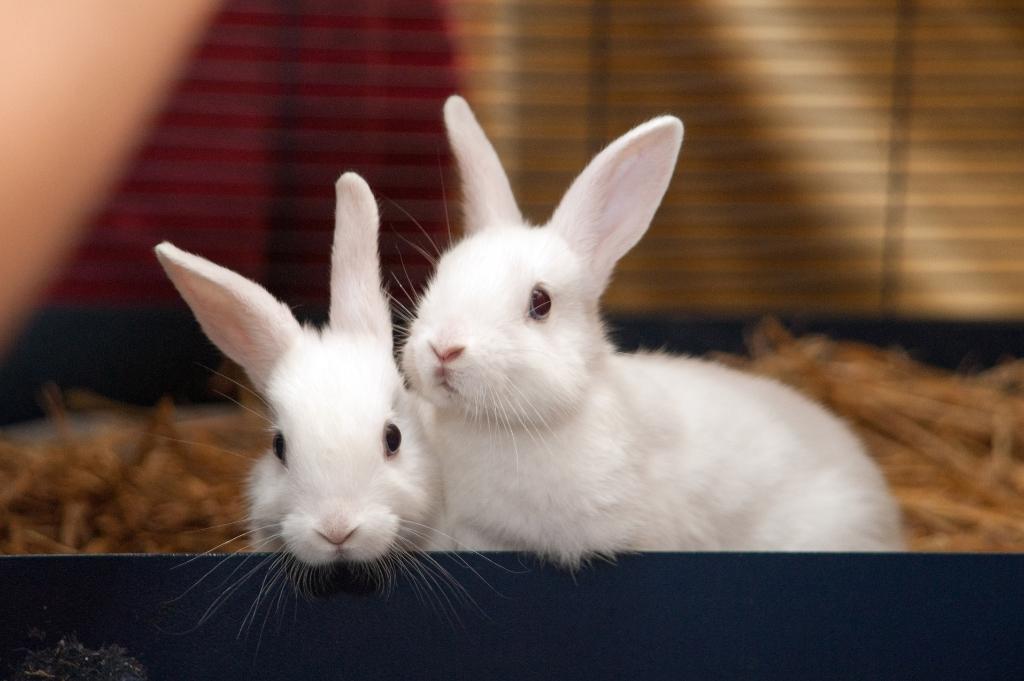 In Gorinchem werd een konijn achtergelaten in een doos Dierenasiel Gorinchem © BDU Media
