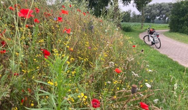 Tijdens de fietstocht kunt u genieten van deze prachtige bloemenranden.