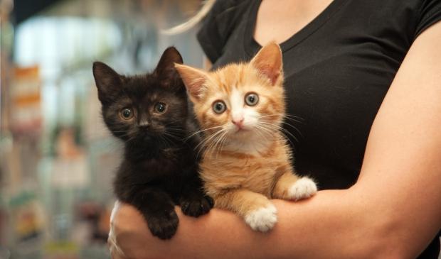 <p>In de polder werden diverse nestjes met kittens gevonden</p>