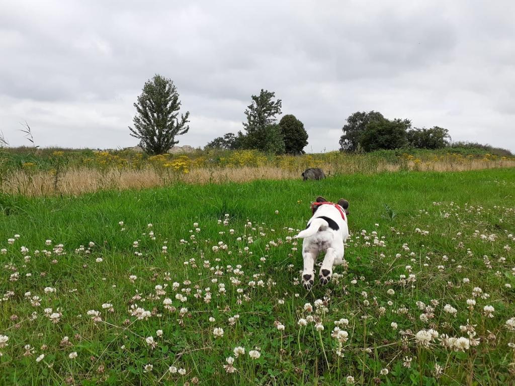 &#39;Groenstrook dijkje Bovenduist/ Bergenboulevard &nbsp;Amersfoort-Vathorst juli 2021, daar word je toch blij van: wilde bloemen, nog niet gemaaid en een prachtige Hollandse lucht...<br>onze blije pup (12 weken) Fee die haar pootjes licht op weg naar haar grote zus Sophietje.&#39; Diana Evers-Weerdestijn  © BDU media