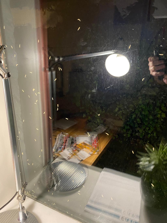 Maden op de ramen R. de Kruif © BDU