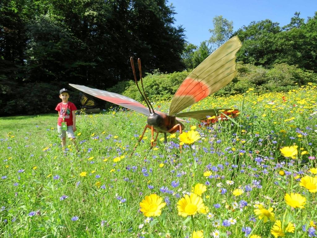 Prachtige Vlinder tussen de fraaie veldbloemen Onno Wijchers © BDU media