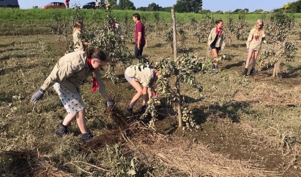 <p>Leden van Scouting Lunteren aan het werk bij fruitboerderij G&ouml;rtz in Baarlo.</p>