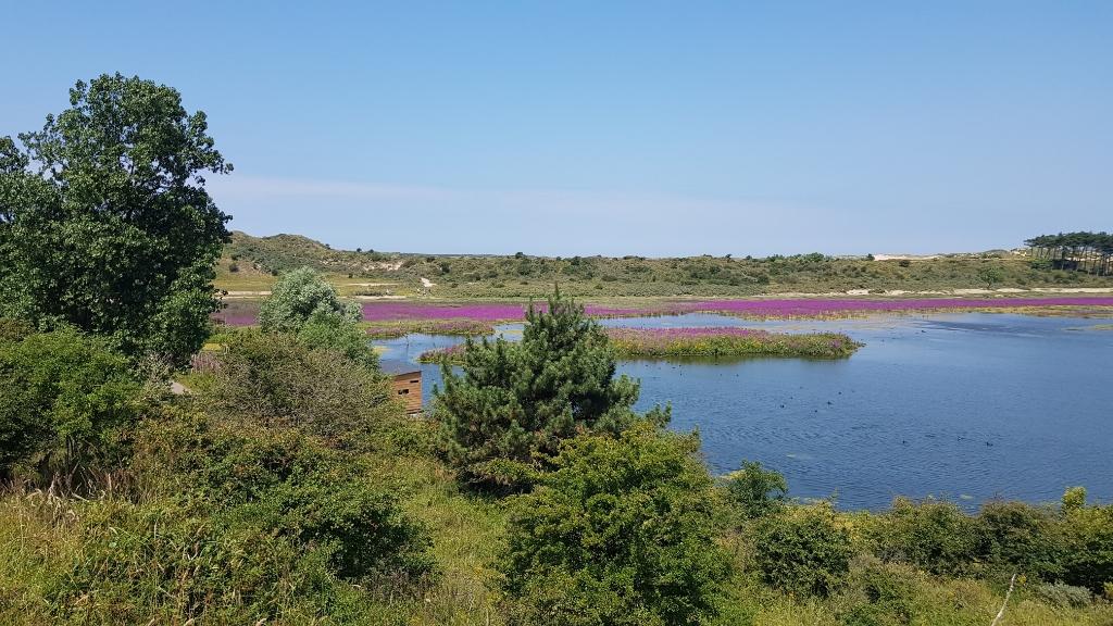 De vogelkijkhut (verscholen midden achter de struiken) geeft een goed zicht op het meer en de vogels. Mariëlle Tukker © BDU Media