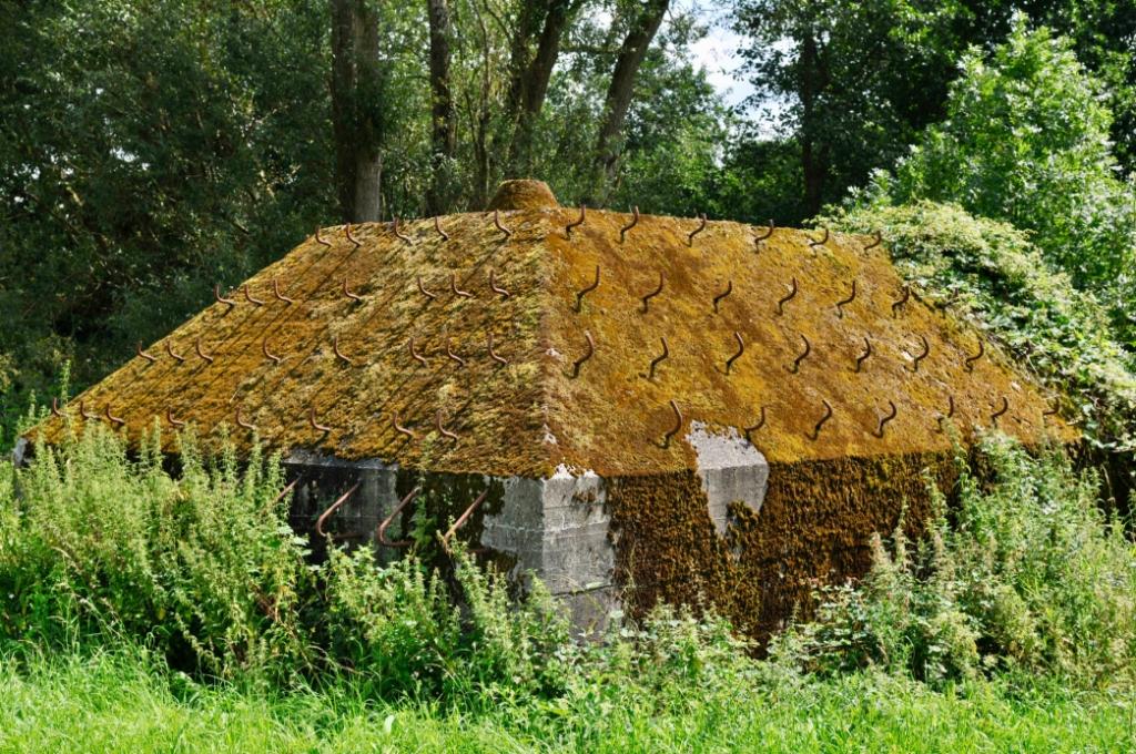 Groepsschuilplaatsen zijn vaak bont gekleurd door de mossen en korstmossen. Een fraai voorbeeld is de Eb14 langs de Nieuwe Zuiderlingedijk in Vak Heukelum. Hendrik Dijk © BDU Media