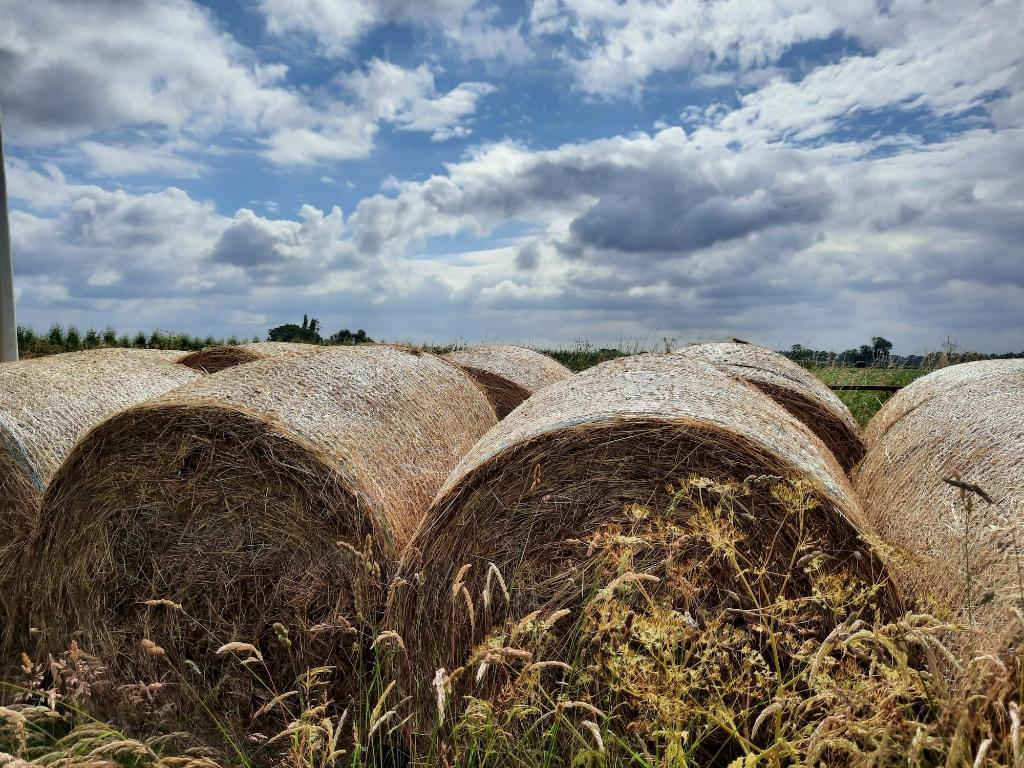 Het gras zal altijd groener zijn... Petra Verhooren © BDU media
