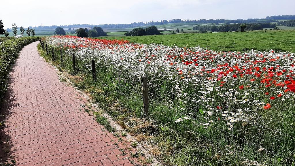 """,,Prachtig weiland in Herkenrade, een buurtschap dat behoort bij het kerkdorp Sint Geertruid."""" Wilgo Deekman © BDU"""