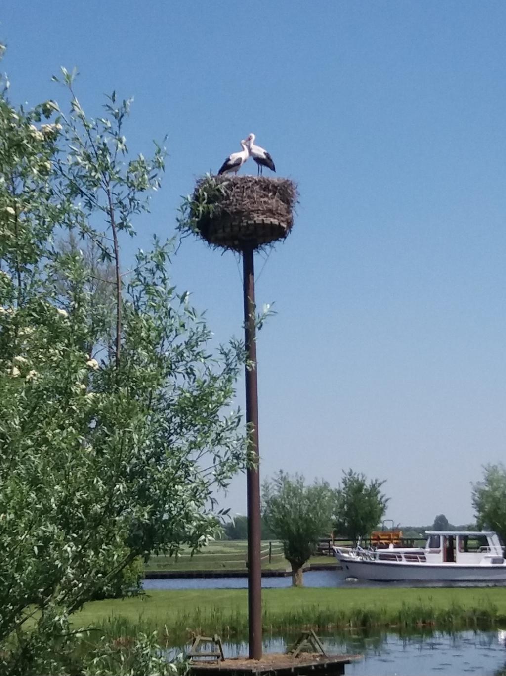 """,,Dit mooie liefdespaar gespot bij de Weerribben op een mooie julidag."""" Joke van Donkelaar © BDU"""
