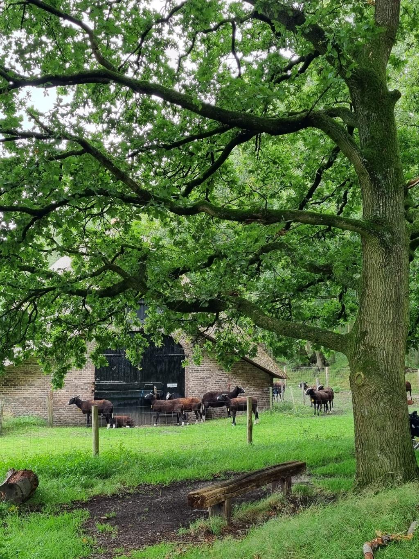 De schaapskooi in het Zuylesteinse bos, In Leersum. Wijnie Peterse © BDU