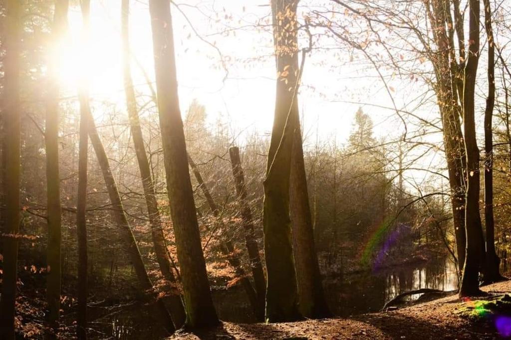 De foto is gemaakt in het Lockhorsterbos in Leusden. Er is water en bomen en een kleine mini-regenboog is er te zien op de foto. Gemaakt op 2 juni 2021 in de ochtend. Marlot Witteveen © BDU media