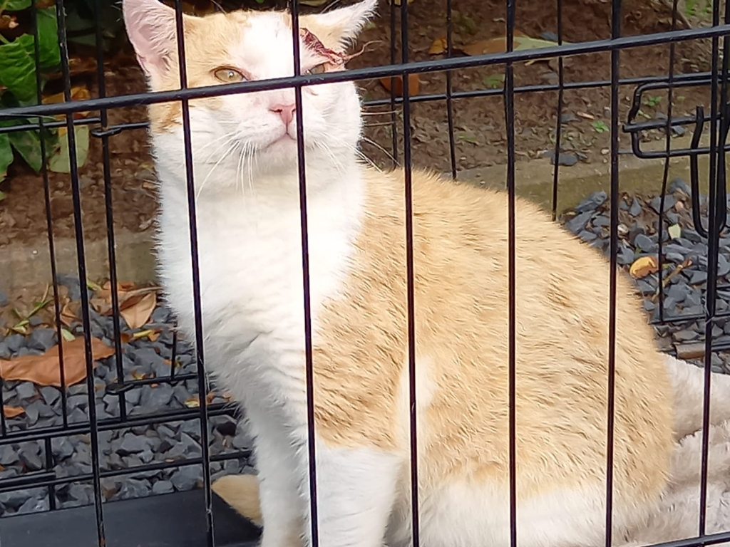 Gevonden kat Bijschoterweg Voorthuizen Vinder © BDU media