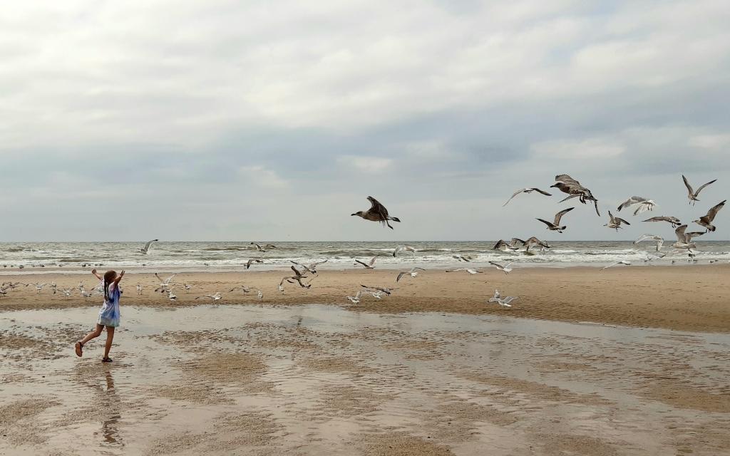 """,,Op de foto onze dochter Roos wandeld op het strand van Sint maartenszee tijdens onze vakantie van dit jaar. Ze liep op een grote groep Meeuwen af zodat we dit mooie beeld kregen."""" Jelle Bakker © BDU Media"""