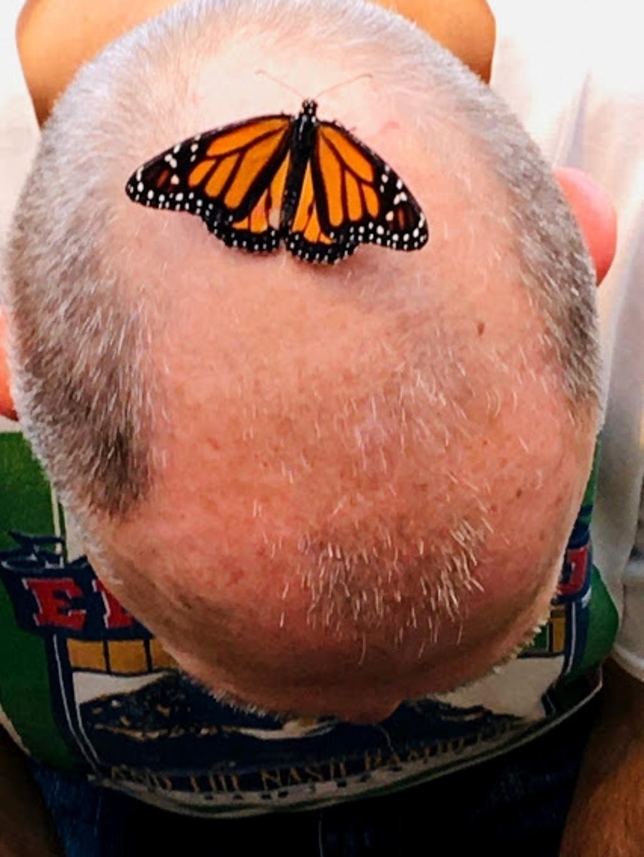 """,,Deze foto is 6 juli gemaakt in de Botanische Tuinen in Utrecht. De vlinder in de kas zit hier op het hoofd van mijn man Hennie."""" Corrie van de Haar © BDU"""