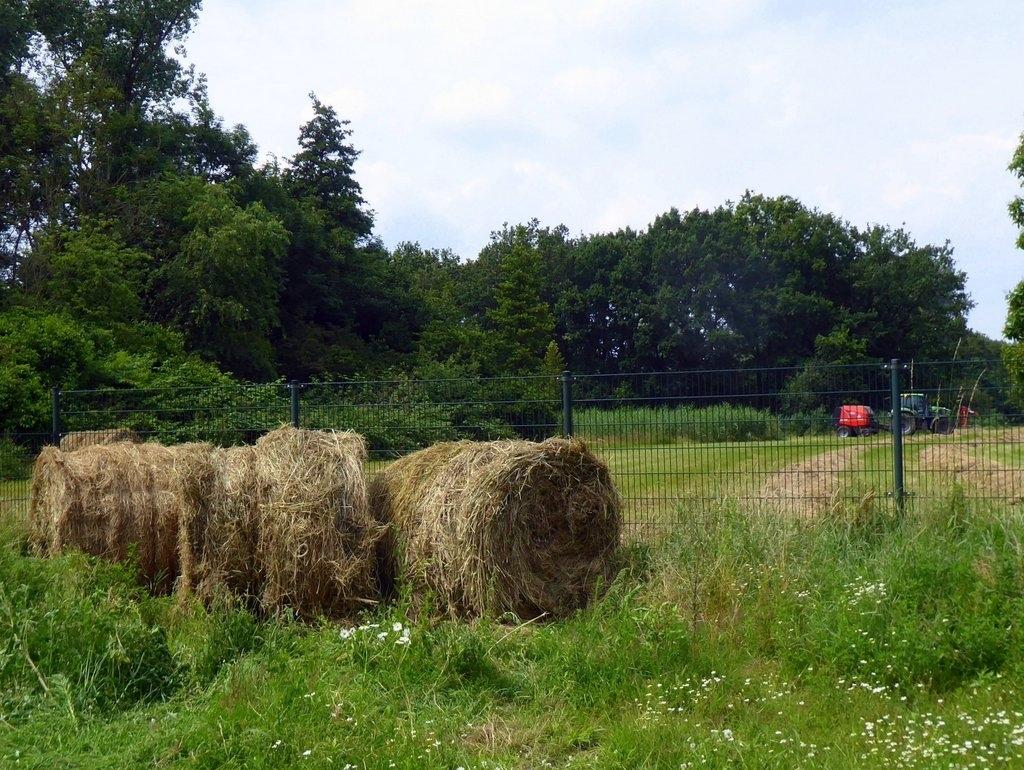 Het oogsten van ronde hooibalen in het stiltegebied achter de Jachtlaan in Driebergen op 10 juli 2021. Riet de Lang © BDU