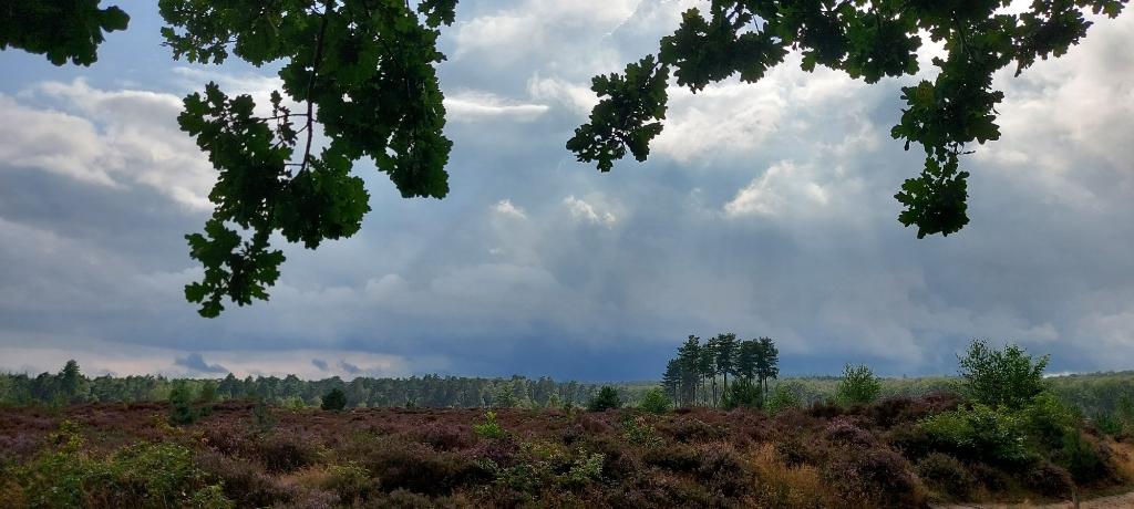 De foto is afgelopen 22 augustus gemaakt tijdens een wandeling in Den Treek van de bloeiende heide. Zon, prachtige wolkenpartijen en een beetje regen vergezelde ons tijdens een heerlijke wandeling. Jasper van Zandwijk © BDU media