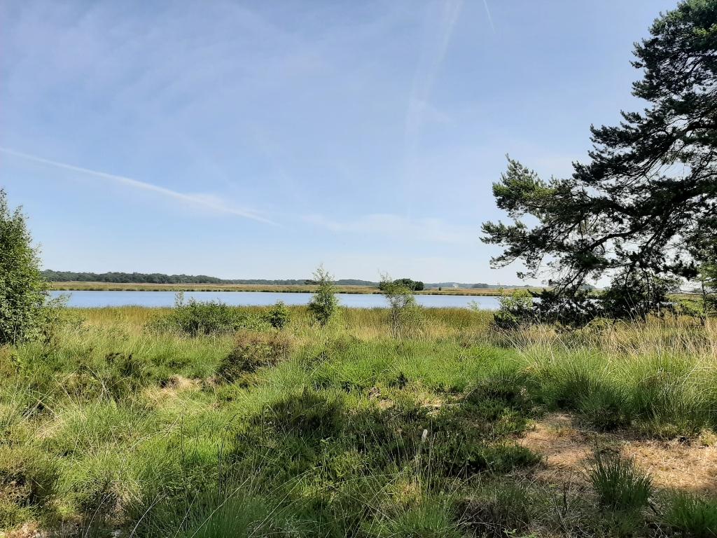 Deze foto is genomen in het Nationaal Park Dwingelerveld nabij Ruinen op 28 juni 2021 12.13 uur. Hans de Ruyer © BDU media