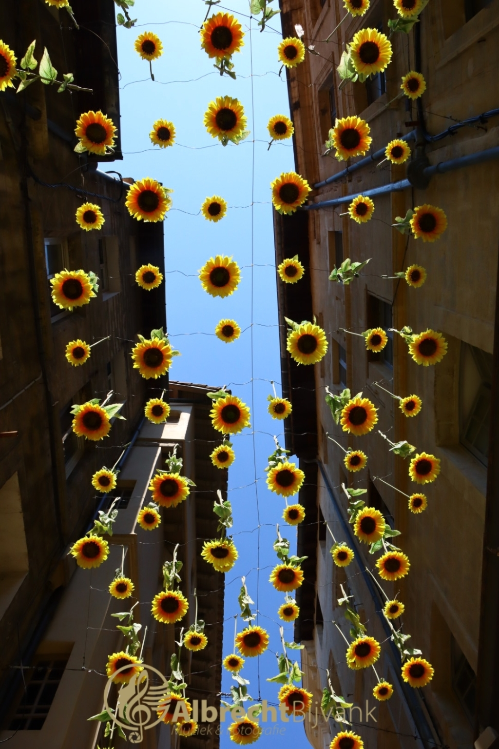 """,,De zonnebloemen vallen uit de lucht in Avignon, Frankrijk, bij 32 graden."""" Albrecht Bijvank © BDU Media"""