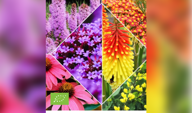 Vriendelijke planten