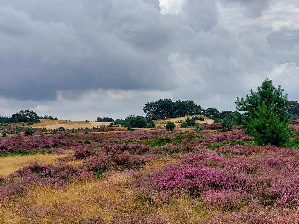 Een echt Drents landschap in augustus gemaakt op  20 augustus bij het Drents-Friese Wold. Joke van Donkelaar © BDU