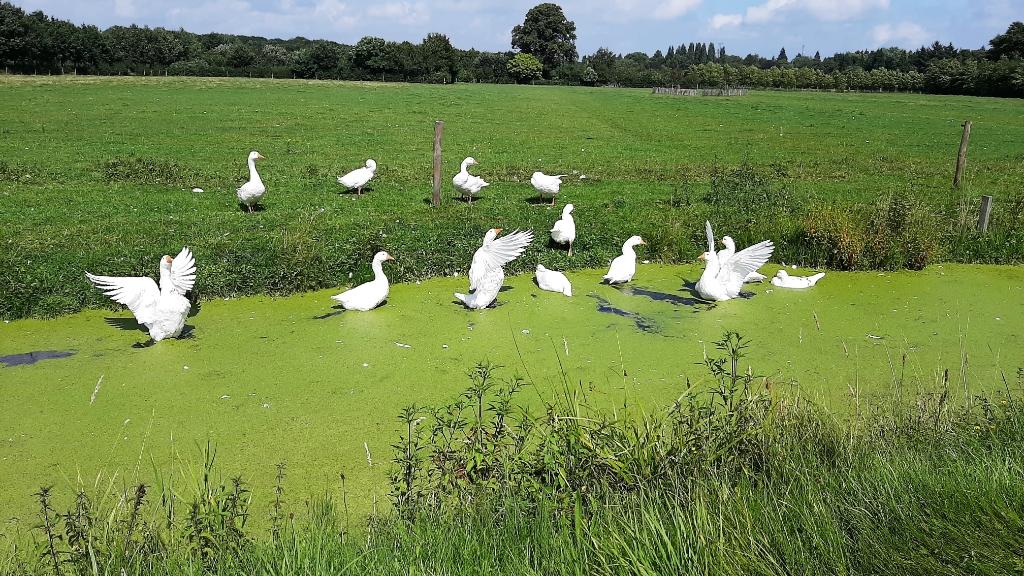 De Gooyerdijk in Doorn Wilgo Deekman © BDU